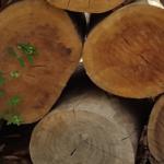 ערימה של בולי עץ
