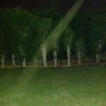 תמונה של שדרת עצים בפארק בלילה