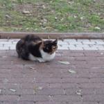 חתול יושב על מדרכה ברחוב