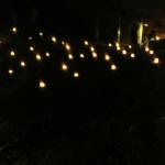 אורות במערה חשוכה