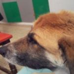 הכלבה אמה מביטה