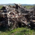 ערימה של עצים שרופים ביער