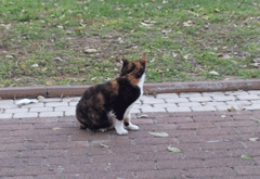 חתול קטן בשביל
