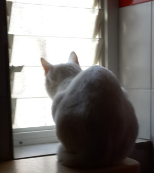חתול מול חלון