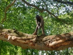 אדם עובד על גזע עץ