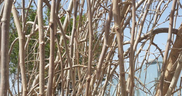 ענפים ועלים