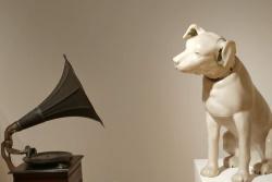 כלב מאזין