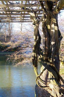 עץ ואגם