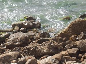 סלעים וים