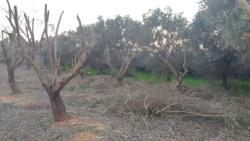 עצים עירומים