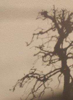 צל של עץ