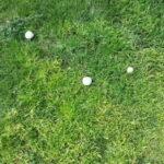 פטריות בדשא